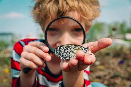 Boy looking at butterfly