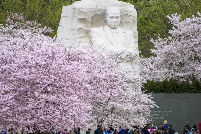Cherry blossoms surround the Martin Luther King, Jr. Memorial