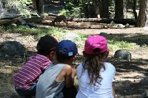 Kids watching a deer while playing in the woods