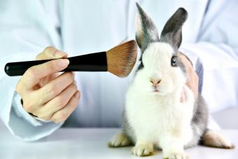 Does Mary Kay Test on Animals?