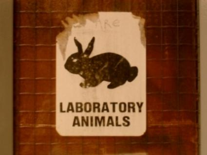 Lab_rabbit.jpg