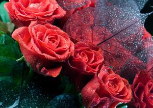 Roseessencescent.jpg