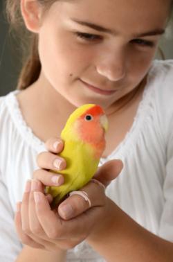 Niño sosteniendo un periquito agapornis