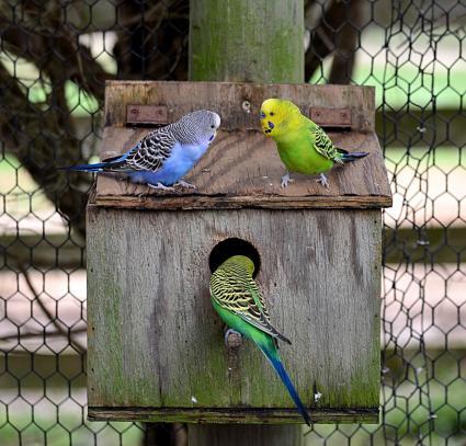 Caja de nido