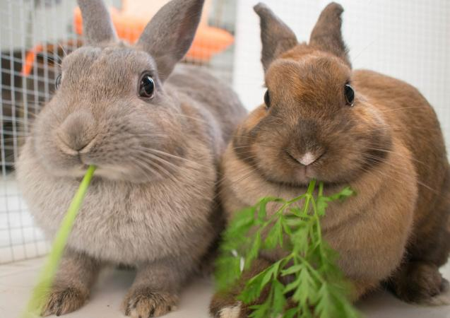 Dos conejos comiendo en jaula