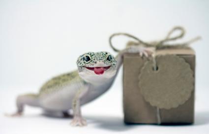 Gecko leopardo sacando la lengua