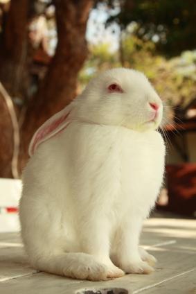lindo conejo blanco