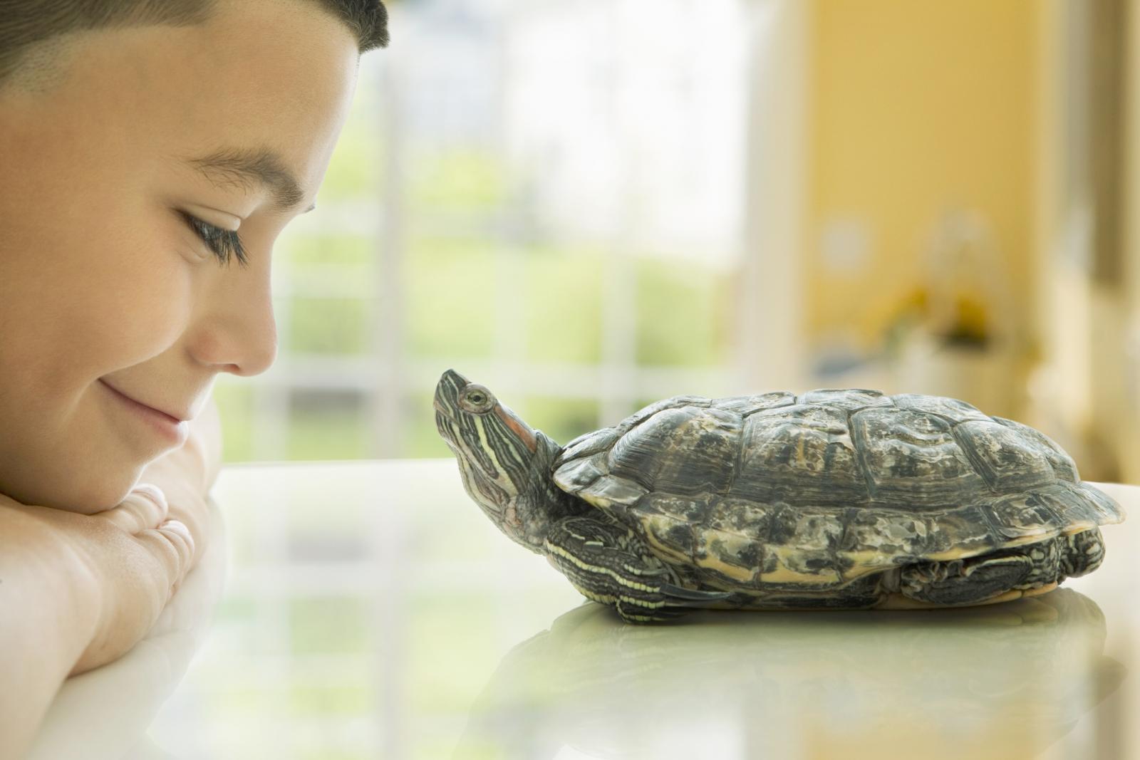 Niño mirando a su mascota tortuga