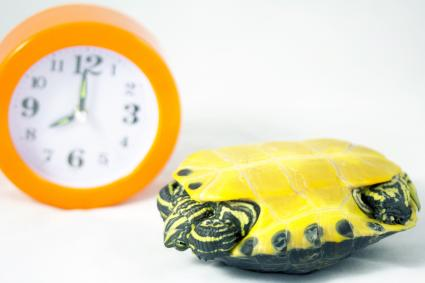 Tortuga tumbada y un reloj