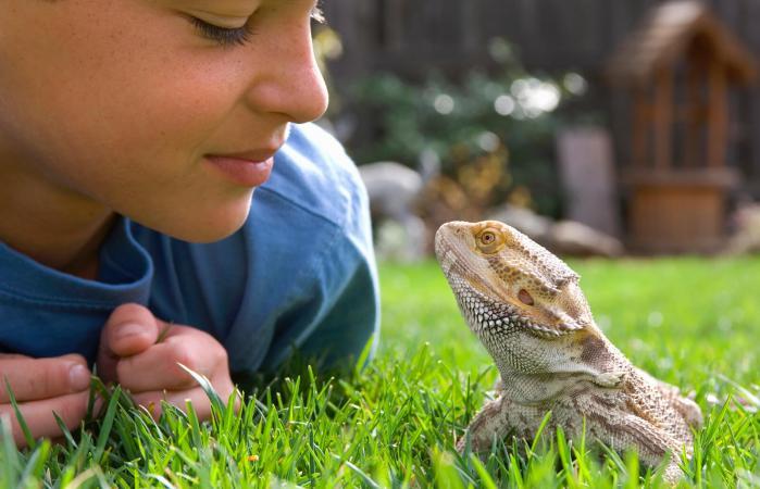 niño con su mascota lagarto