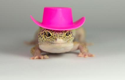 Lagarto con un elegante sombrero rosa