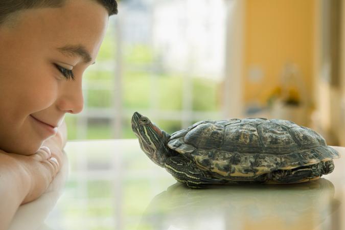 niño sonriendo a su tortuga