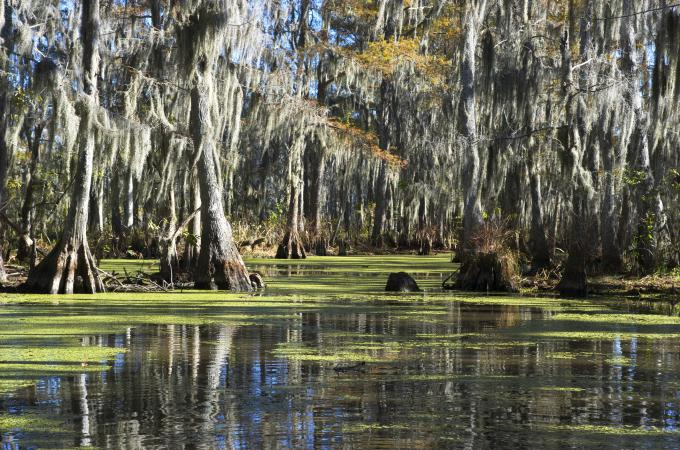 Humedales en Louisiana, USA