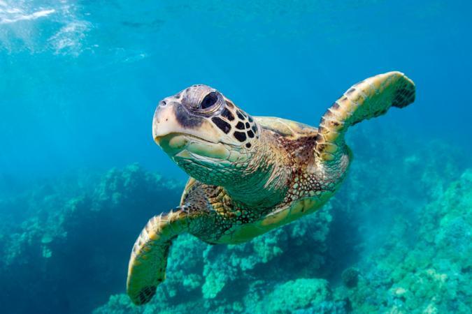 tortuga marina en el mar
