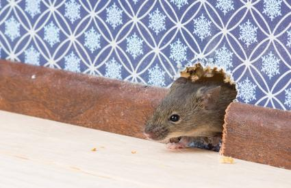 Ratón en un agujero en la pared