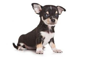 Adopt a Virtual Puppy
