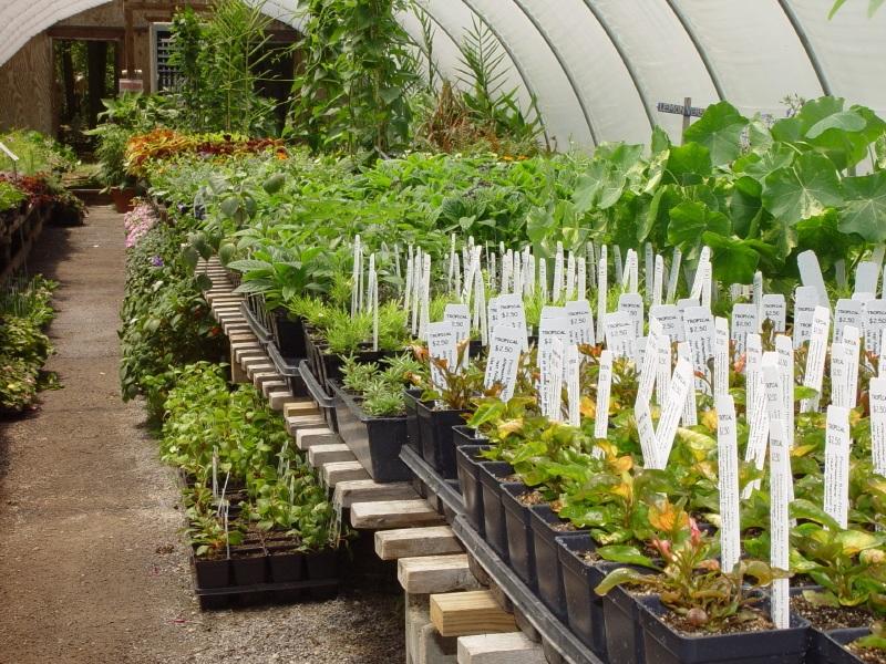 choosing-organic-herbs.jpg