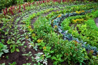 How to Grow an Organic Vegetable Garden