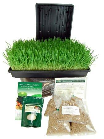 https://cf.ltkcdn.net/organic/images/slide/166638-300x400-wheatgrasskit2_amz.jpg