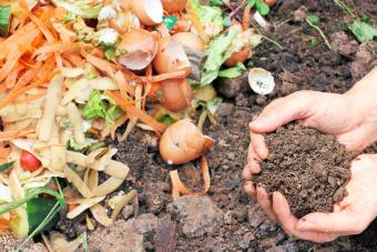 Advantages and Disadvantages of Organic Fertilizer