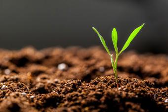 Healthy soil with green sprout