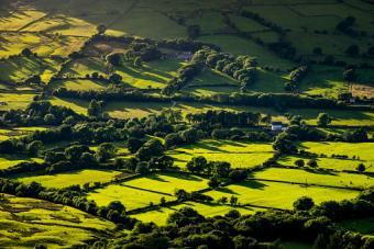 hedges and trees on farmland