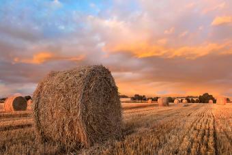 Organic Hay Prices