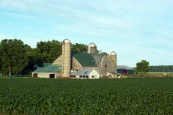 There are a number of Amish farms in Ontario.