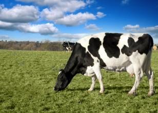 Organic Livestock for Sale
