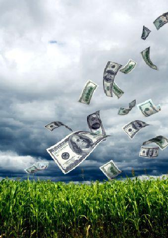 Organic Farming Grants