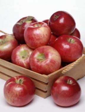 Harvest_Apples.jpg