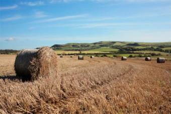 USDA Organic Hay Standards