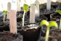 Problems that Occur When Organic Farming