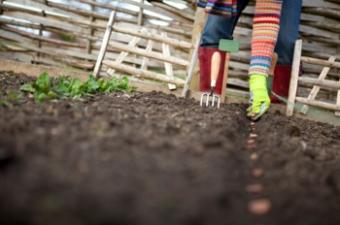 Organic Seeds for Southern Climates