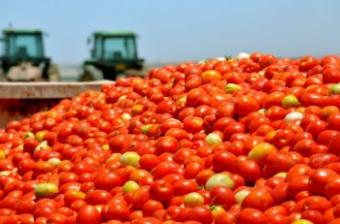 Cost and the Yield of Organic Farming