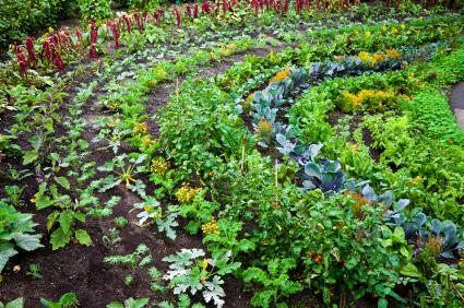 How to grow an organic vegetable garden lovetoknow for Vegetable garden images