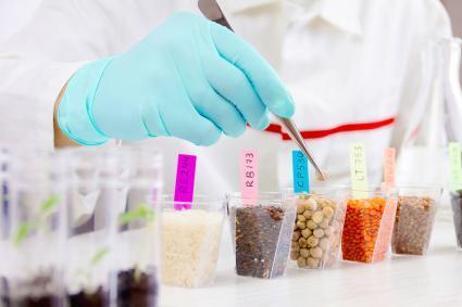 Testing gmo foods