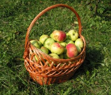 Basket_of_Apples.jpg