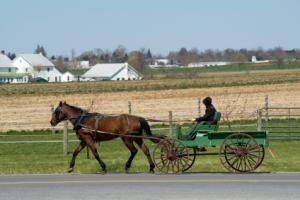 horse and buggy in farming area