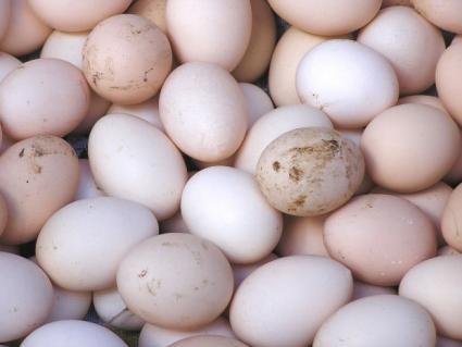 Freshly laid eggs.