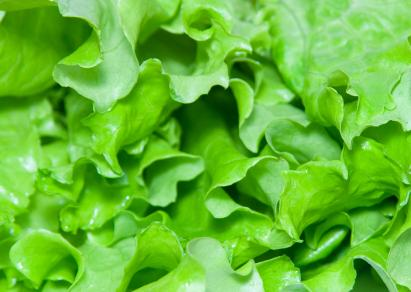 Organic_lettuce.jpg