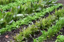 organic weed care