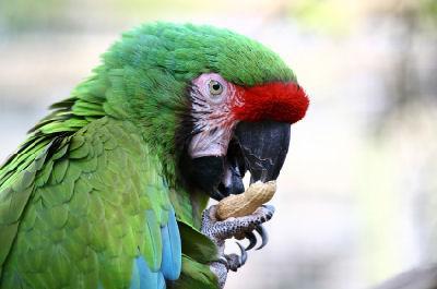 Organic Parrot Food