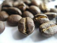 Terra Nova Coffees