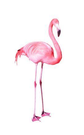 Dollar Bill Flamingo