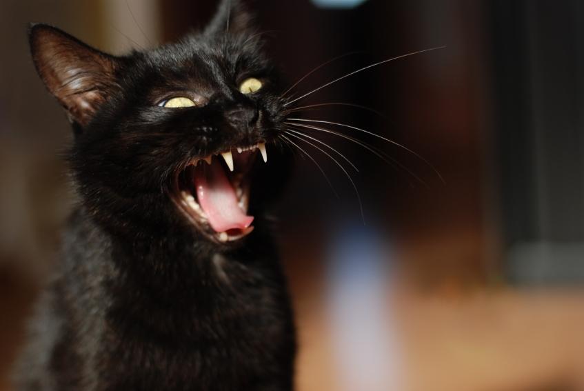 https://cf.ltkcdn.net/paranormal/images/slide/11077-847x567-Freaked_out_cat.jpg