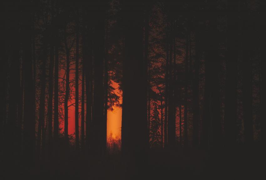 https://cf.ltkcdn.net/paranormal/images/slide/245326-850x577-spookyforest.jpg