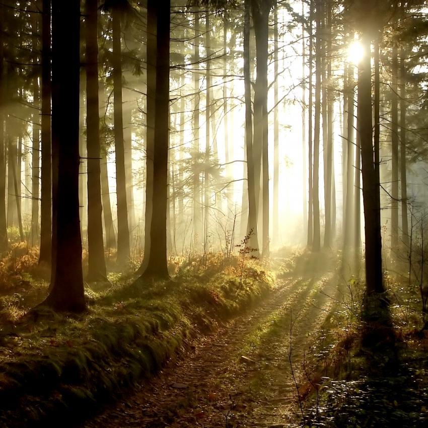 https://cf.ltkcdn.net/paranormal/images/slide/246054-850x850-forest.jpg