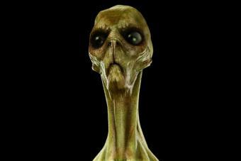 https://cf.ltkcdn.net/paranormal/images/slide/215216-704x469-Alien-head.jpg