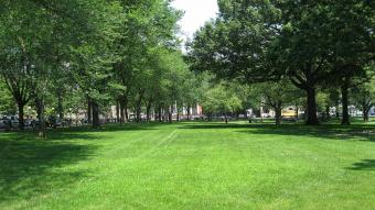New Haven Green, New Haven